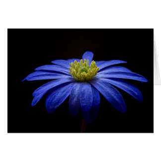 Blue Anemone Modern Floral Fine Art Photography Card