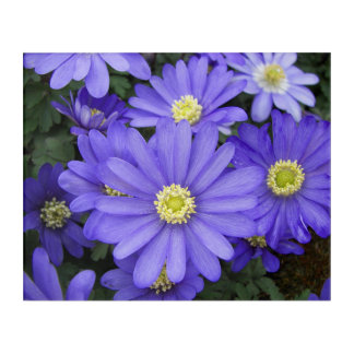 Blue Anemones Floral Acrylic Wall Art