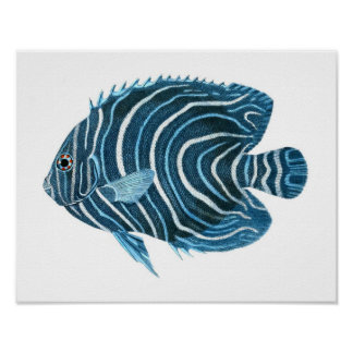 Blue Angel Fish Coastal Wall Art Decor Poster