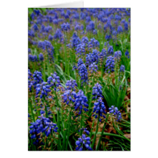 Blue Armenian Hyacinth Notecard