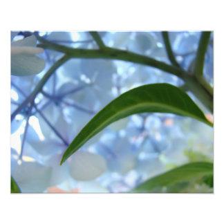 Blue art prints nature Hydrangea Floral artwork Photo Art