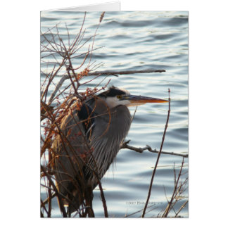 Blue as a Heron Greeting Card