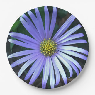 Blue Aster Paper Plate
