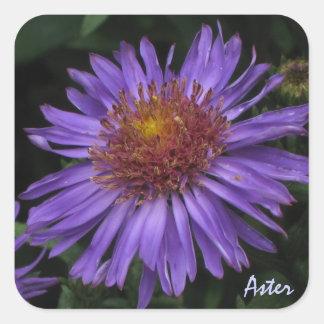Blue Aster Sticker