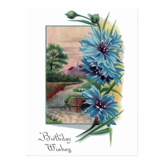 Blue Bachelor's Buttons Birthday Postcard