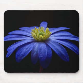 Blue Balkan Anemone flower Mouse Pad