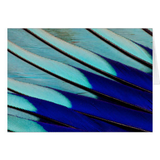 Blue-bellied Roller feathers Card
