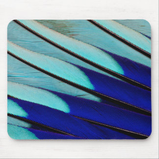 Blue-bellied Roller feathers Mouse Pad