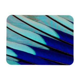 Blue-bellied Roller feathers Rectangular Photo Magnet