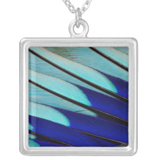 Blue-bellied Roller feathers Silver Plated Necklace