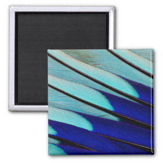 Blue-bellied Roller feathers Square Magnet