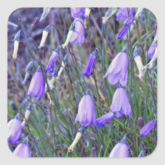 Blue Bells flowers Square Sticker
