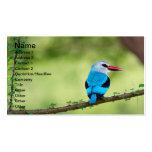 Blue bird business card templates