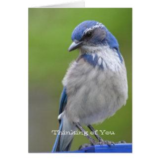 Blue Bird Card