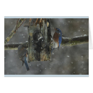 Blue bird couple in the snow card
