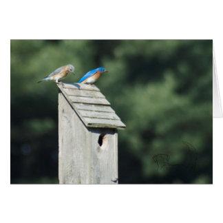 Blue Bird House, Card
