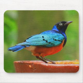 Blue Bird Mousepad