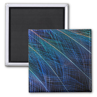 Blue Bird Of Paradise Feather Abstract Magnet