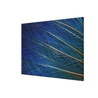 Blue Bird of Paradise feathers Canvas Print