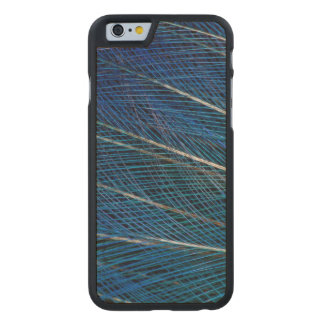 Blue Bird of Paradise feathers Carved® Maple iPhone 6 Case