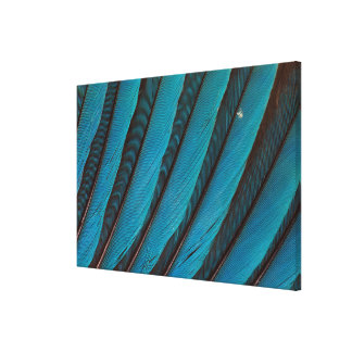 Blue Blue-Bellied Roller Feather Design Canvas Print