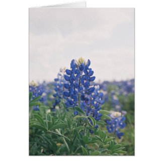 Blue Bonnet Card