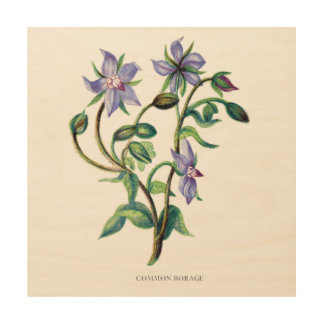 Blue Borage Wildflower Series Botanical Wall Art