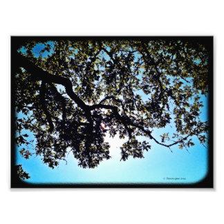 Blue Branches 24x20 Photo Print
