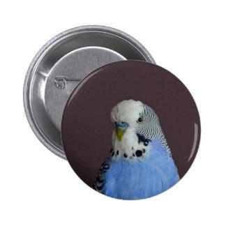 Blue Budgie Bird Animal 2 Inch Round Button