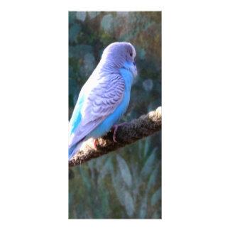 Blue Budgie Bird Custom Rack Card