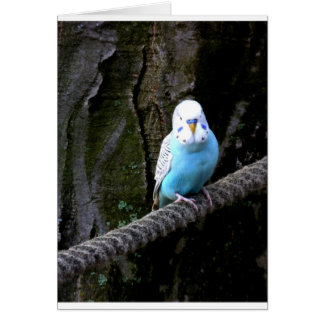 Blue Budgie Card