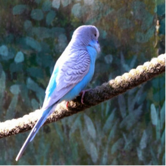 Blue Budgie Cut Out