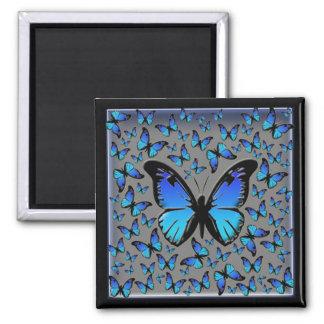 blue butterflies magnet