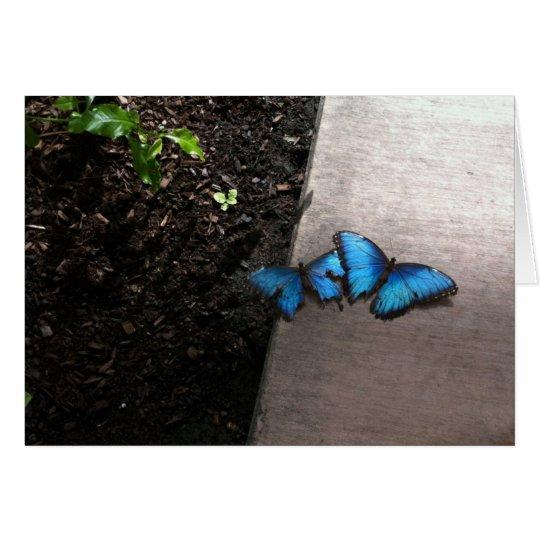 Blue Butterflies Notecard