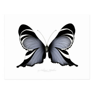 Blue Butterfly 3 Sulawesi Woodtree Postcard