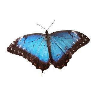 Blue Butterfly Animal Pattern Peace Love Destiny Photo Cutouts