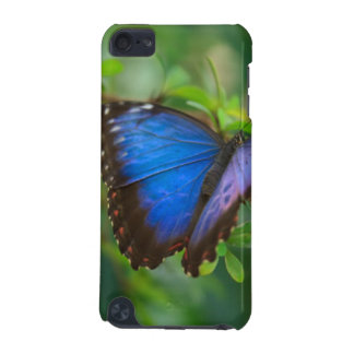 Blue Butterfly iPod Touch (5th Generation) Cover