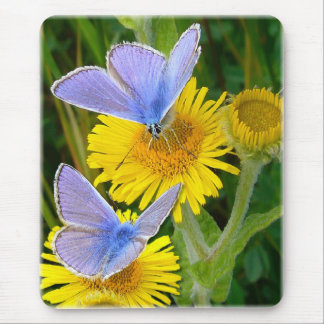BLUE BUTTERFLY ~ Mousepad # 2