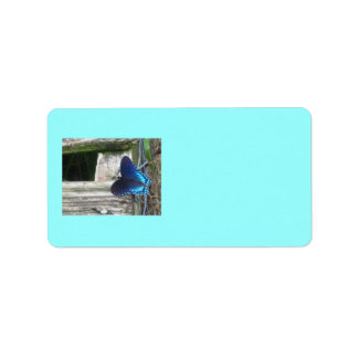 Blue Butterfly Resting Labels