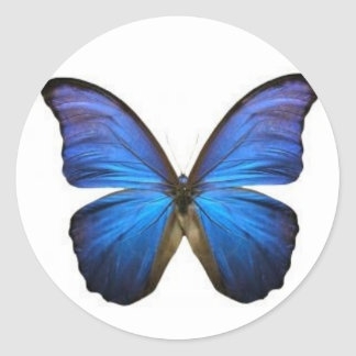 Blue Butterfly Stickers