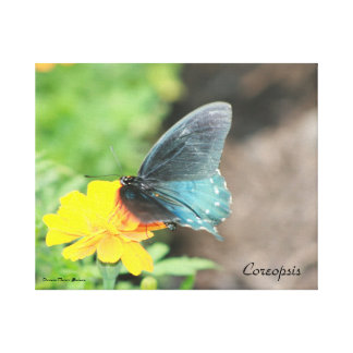 Blue Butterfly Yellow Coreopsis Summer Canvas