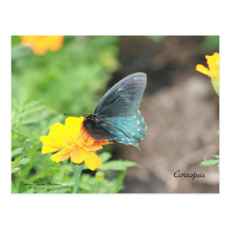 Blue Butterfly Yellow Coreopsis Summer Postcard