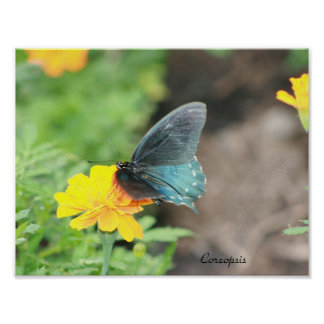 Blue Butterfly Yellow Coreopsis Summer Poster