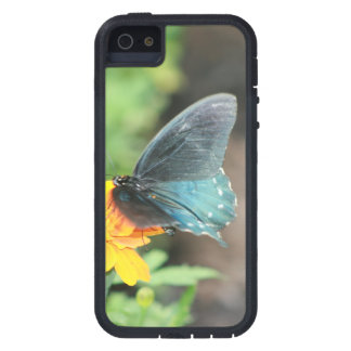 Blue Butterfly Yellow Coreopsis Summer Products Case For The iPhone 5