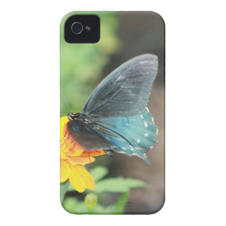 Blue Butterfly Yellow Coreopsis Summer Products iPhone 4 Case-Mate Case