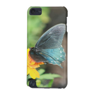 Blue Butterfly Yellow Coreopsis Summer Products iPod Touch (5th Generation) Cover