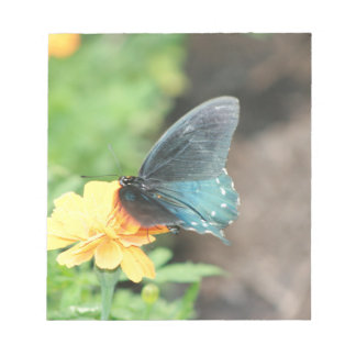 Blue Butterfly Yellow Coreopsis Summer Products Notepad