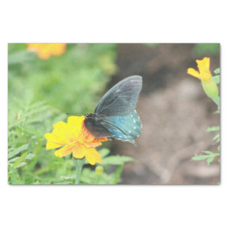 Blue Butterfly Yellow Coreopsis Summer Tissue Tissue Paper
