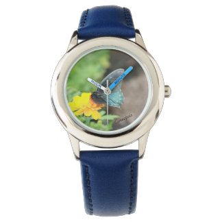 Blue Butterfly Yellow Coreopsis Summer Watch