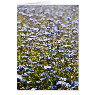 Blue Carpet Card